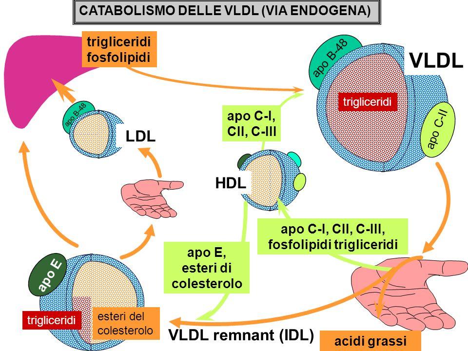 CATABOLISMO DELLE VLDL (VIA ENDOGENA) trigliceridi fosfolipidi apo C-I, CII, C-III apo B-48 LDL HDL apo B-48 VLDL trigliceridi apo C-II VLDL remnant (