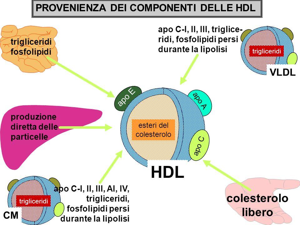 PROVENIENZA DEI COMPONENTI DELLE HDL HDL esteri del colesterolo trigliceridi fosfolipidi apo A trigliceridi VLDL trigliceridi produzione diretta delle