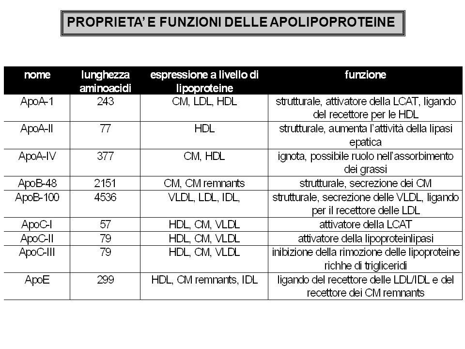 PROPRIETA E FUNZIONI DELLE APOLIPOPROTEINE