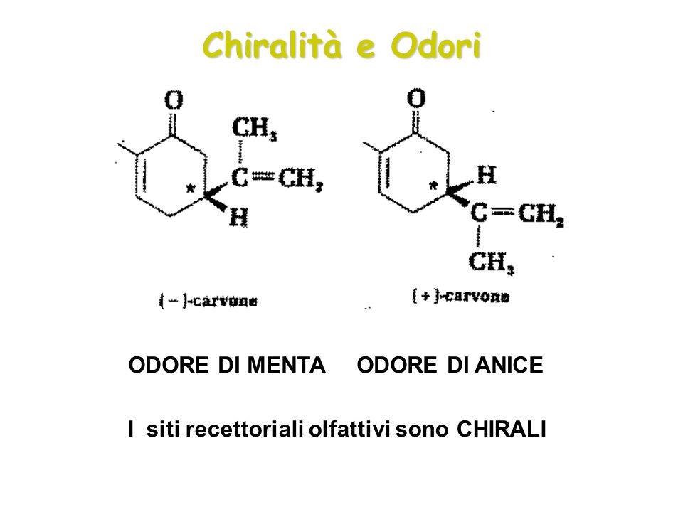 Chiralità e Odori ODORE DI MENTA ODORE DI ANICE I siti recettoriali olfattivi sono CHIRALI