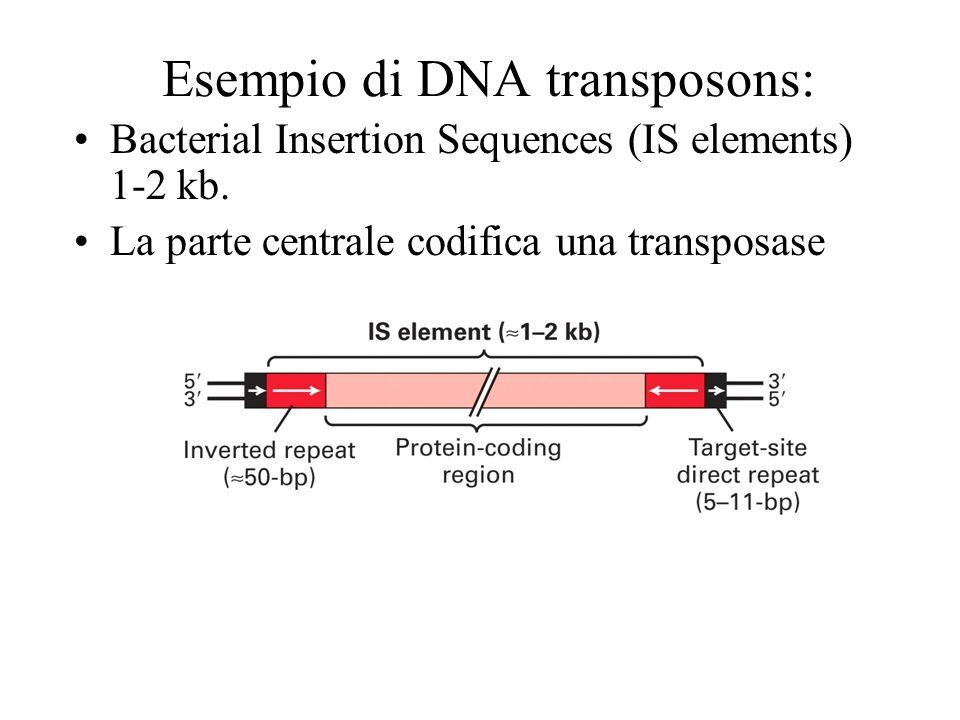 Esempio di DNA transposons: Bacterial Insertion Sequences (IS elements) 1-2 kb. La parte centrale codifica una transposase
