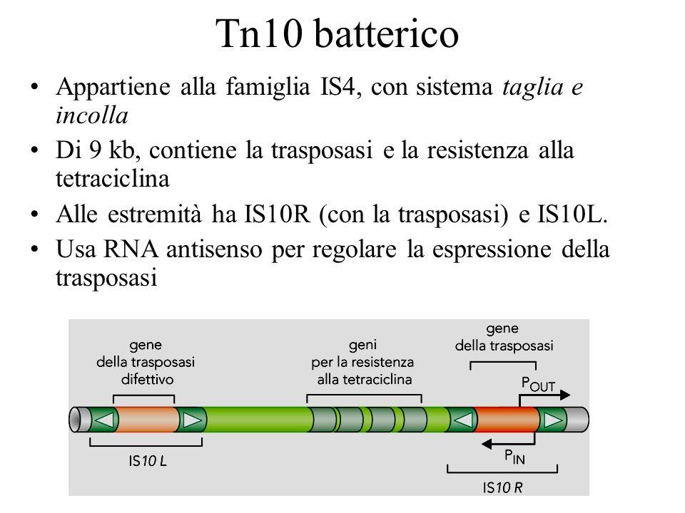 Tn10 batterico Appartiene alla famiglia IS4, con sistema taglia e incolla Di 9 kb, contiene la trasposasi e la resistenza alla tetraciclina Alle estre