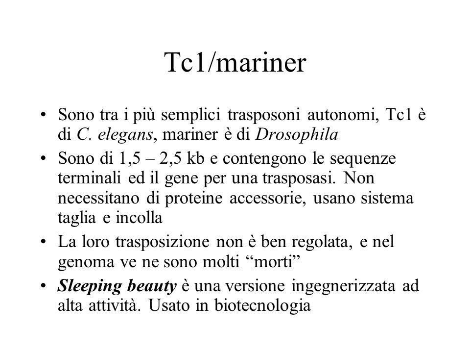 Tc1/mariner Sono tra i più semplici trasposoni autonomi, Tc1 è di C. elegans, mariner è di Drosophila Sono di 1,5 – 2,5 kb e contengono le sequenze te