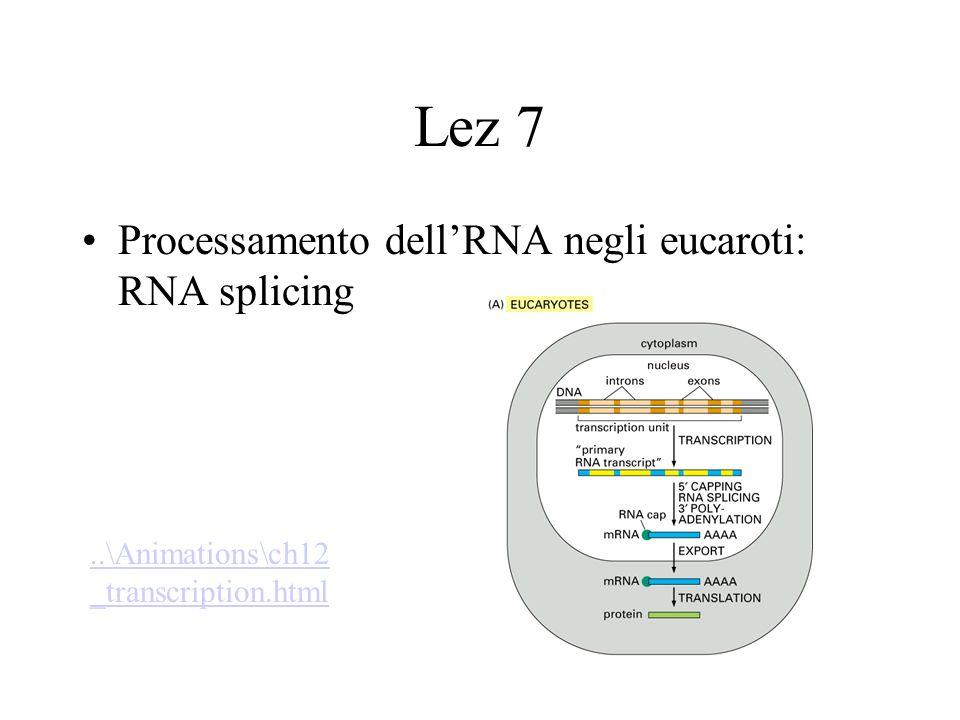 RNA editing Rappresenta un altro modo per modificare la sequenza di un mRNA –deamminazione sito- specifica (C U o A Inosina) –Inserzione o delezione di U diretta da RNA guida