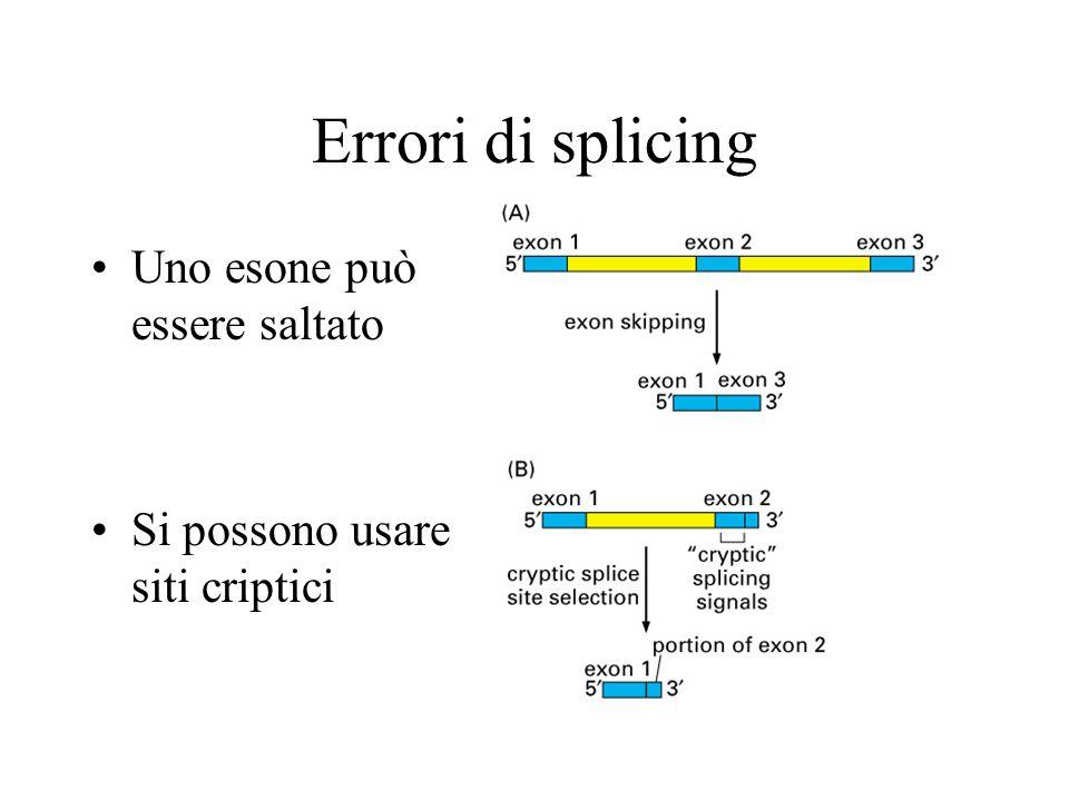 Errori di splicing Uno esone può essere saltato Si possono usare siti criptici