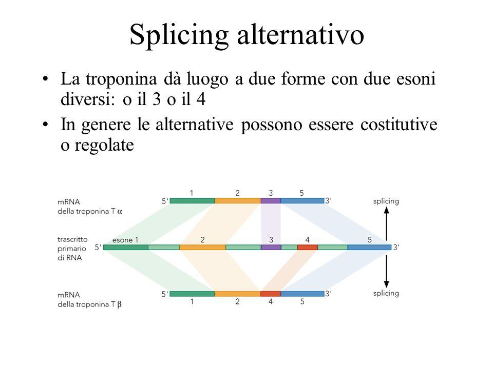Splicing alternativo La troponina dà luogo a due forme con due esoni diversi: o il 3 o il 4 In genere le alternative possono essere costitutive o rego