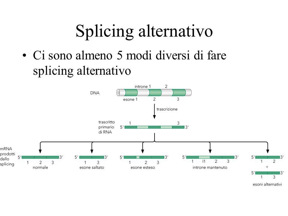 Splicing alternativo Ci sono almeno 5 modi diversi di fare splicing alternativo