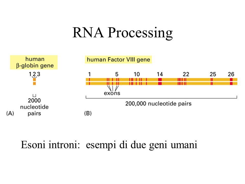 Spesso gli esoni codificano domini strutturali con funzioni distinte.