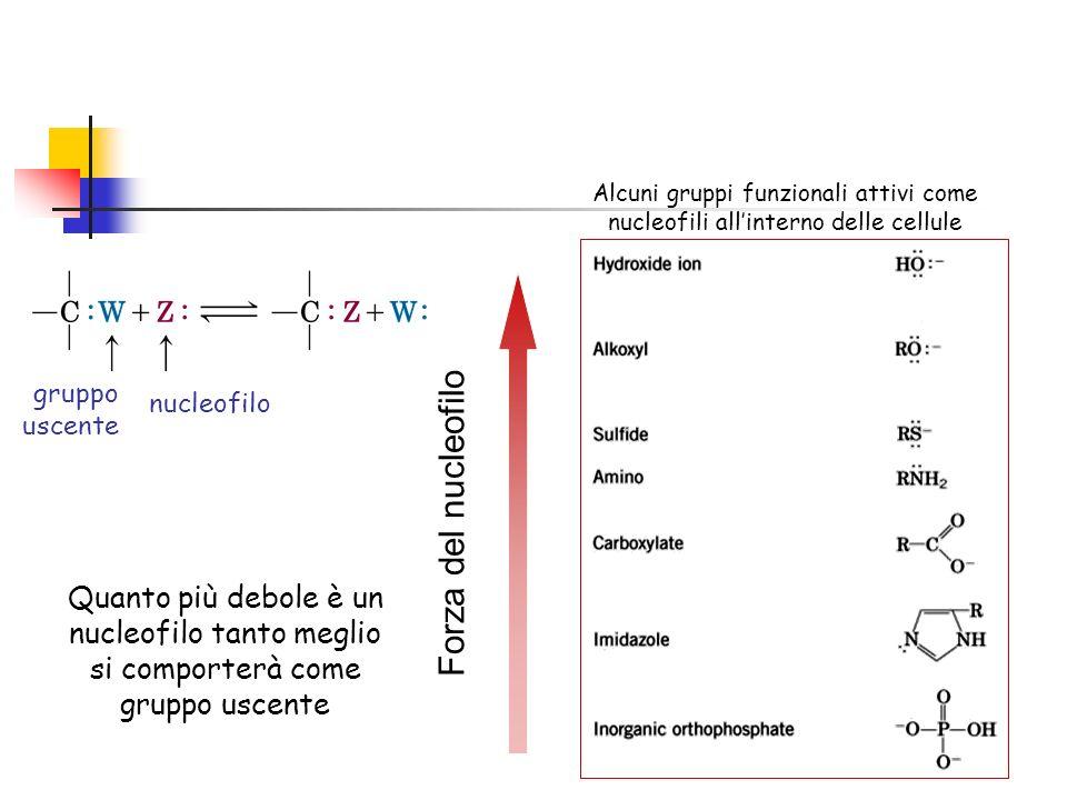 Alcuni gruppi funzionali attivi come nucleofili allinterno delle cellule gruppo uscente nucleofilo Forza del nucleofilo Quanto più debole è un nucleofilo tanto meglio si comporterà come gruppo uscente