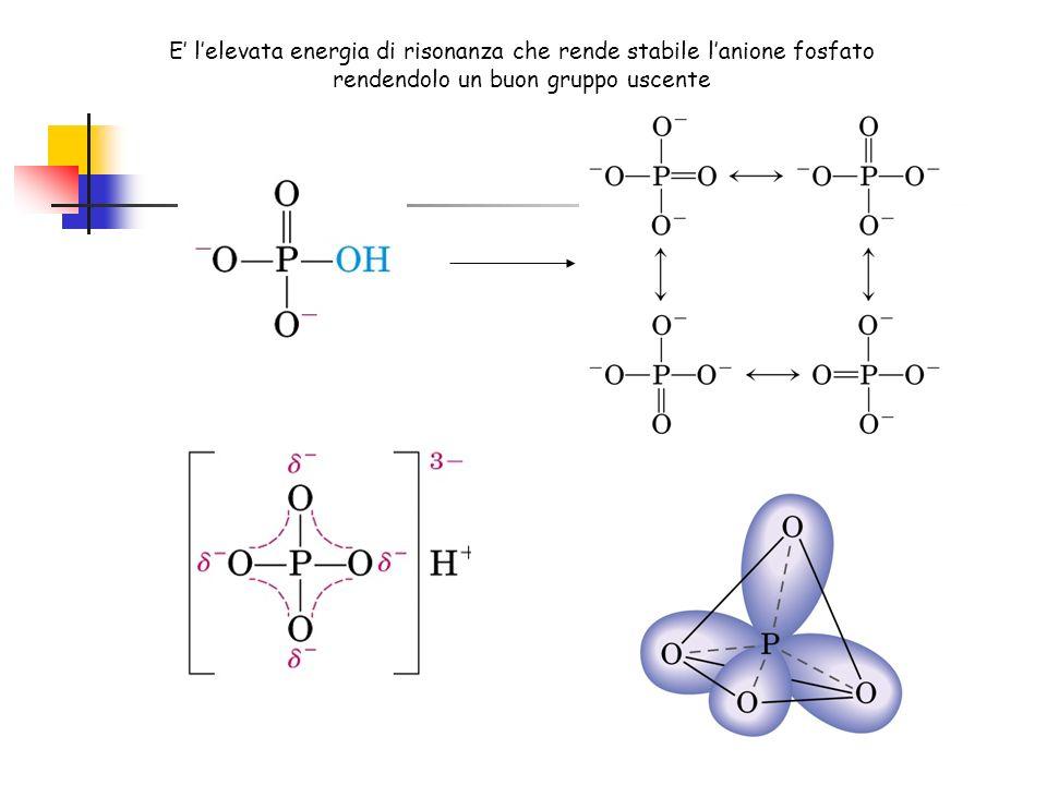 E lelevata energia di risonanza che rende stabile lanione fosfato rendendolo un buon gruppo uscente