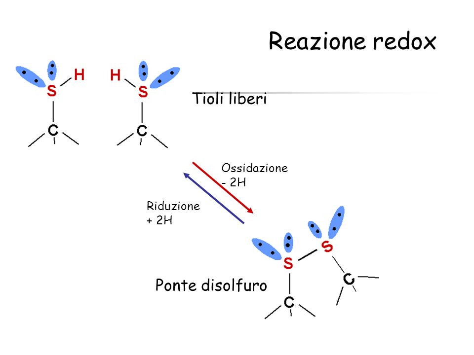 Ossidazione - 2H Riduzione + 2H Ponte disolfuro Tioli liberi Reazione redox