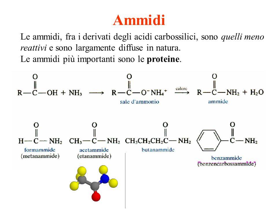 Ammidi Le ammidi, fra i derivati degli acidi carbossilici, sono quelli meno reattivi e sono largamente diffuse in natura. Le ammidi più importanti son