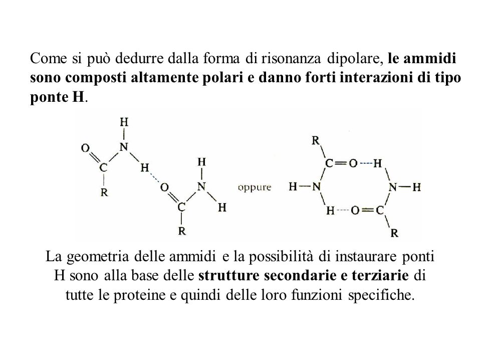 Come si può dedurre dalla forma di risonanza dipolare, le ammidi sono composti altamente polari e danno forti interazioni di tipo ponte H. La geometri