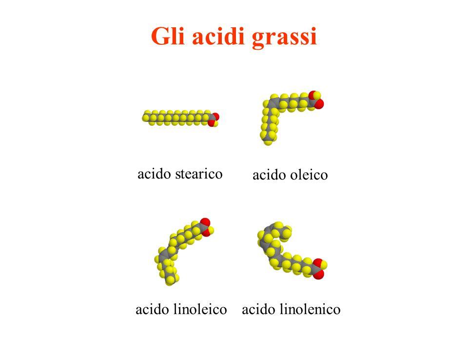 Gli acidi grassi acido stearico acido oleico acido linolenicoacido linoleico