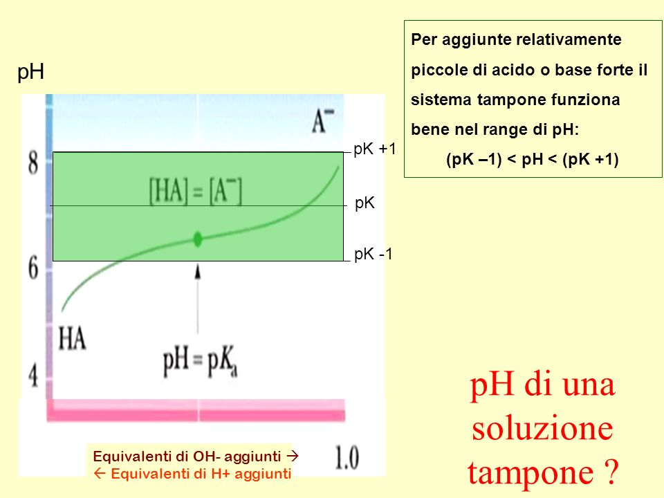 Equivalenti di OH- aggiunti Equivalenti di H+ aggiunti pK pK -1 pK +1 Per aggiunte relativamente piccole di acido o base forte il sistema tampone funz
