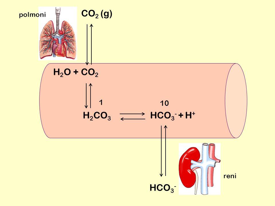H 2 CO 3 HCO 3 - + H + H 2 O + CO 2 10 1 CO 2 (g) HCO 3 - polmoni reni