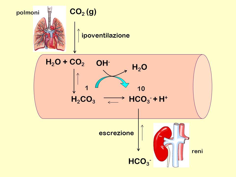 H 2 CO 3 HCO 3 - + H + H 2 O + CO 2 H2OH2O 10 1 CO 2 (g) HCO 3 - polmoni reni ipoventilazione escrezione OH -