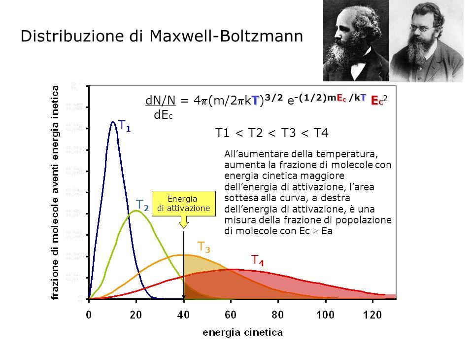 Distribuzione di Maxwell-Boltzmann Allaumentare della temperatura, aumenta la frazione di molecole con energia cinetica maggiore dellenergia di attivazione, larea sottesa alla curva, a destra dellenergia di attivazione, è una misura della frazione di popolazione di molecole con Ec Ea T E c T E c dN/N = 4(m/2kT) 3/2 e -(1/2)mE c /kT E c 2 dE c T1T1 T2T2 T3T3 T4T4 T1 < T2 < T3 < T4 Energia di attivazione