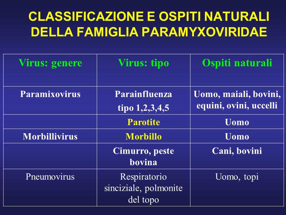 CLASSIFICAZIONE E OSPITI NATURALI DELLA FAMIGLIA PARAMYXOVIRIDAE Virus: genereVirus: tipoOspiti naturali ParamixovirusParainfluenza tipo 1,2,3,4,5 Uom