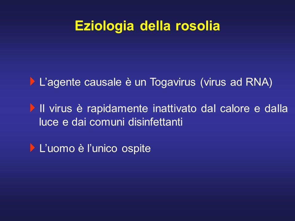Lagente causale è un Togavirus (virus ad RNA) Il virus è rapidamente inattivato dal calore e dalla luce e dai comuni disinfettanti Luomo è lunico ospi