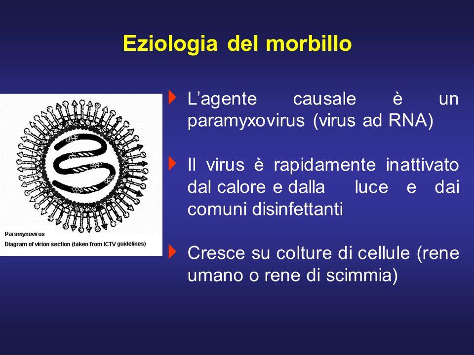 Lagente causale è un paramyxovirus (virus ad RNA) Il virus è rapidamente inattivato dal calore e dalla luce e dai comuni disinfettanti Cresce su coltu