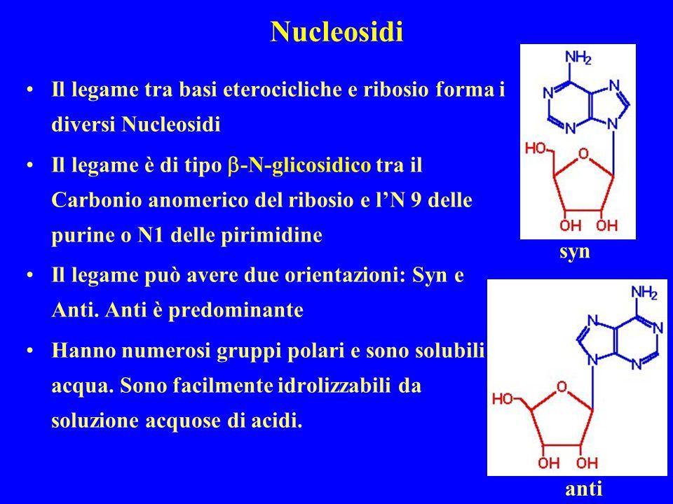Nucleosidi Il legame tra basi eterocicliche e ribosio forma i diversi Nucleosidi Il legame è di tipo -N-glicosidico tra il Carbonio anomerico del ribosio e lN 9 delle purine o N1 delle pirimidine Il legame può avere due orientazioni: Syn e Anti.