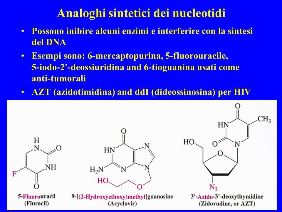 Analoghi sintetici dei nucleotidi Possono inibire alcuni enzimi e interferire con la sintesi del DNA Esempi sono: 6-mercaptopurina, 5-fluorouracile, 5-iodo-2 -deossiuridina and 6-tioguanina usati come anti-tumorali AZT (azidotimidina) and ddI (dideossinosina) per HIV