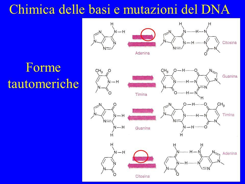 Forme tautomeriche Chimica delle basi e mutazioni del DNA