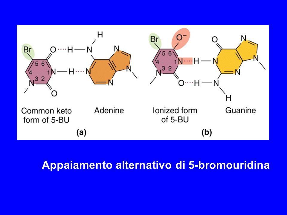 Appaiamento alternativo di 5-bromouridina