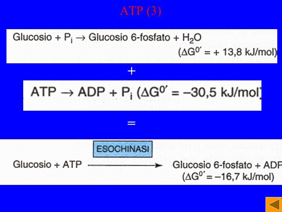 ATP (3) + =
