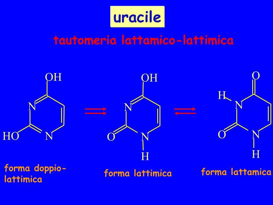 forma lattamica forma doppio- lattimica forma lattimica tautomeria lattamico-lattimica uracile N O OH H N N OH NHO N O H NO H