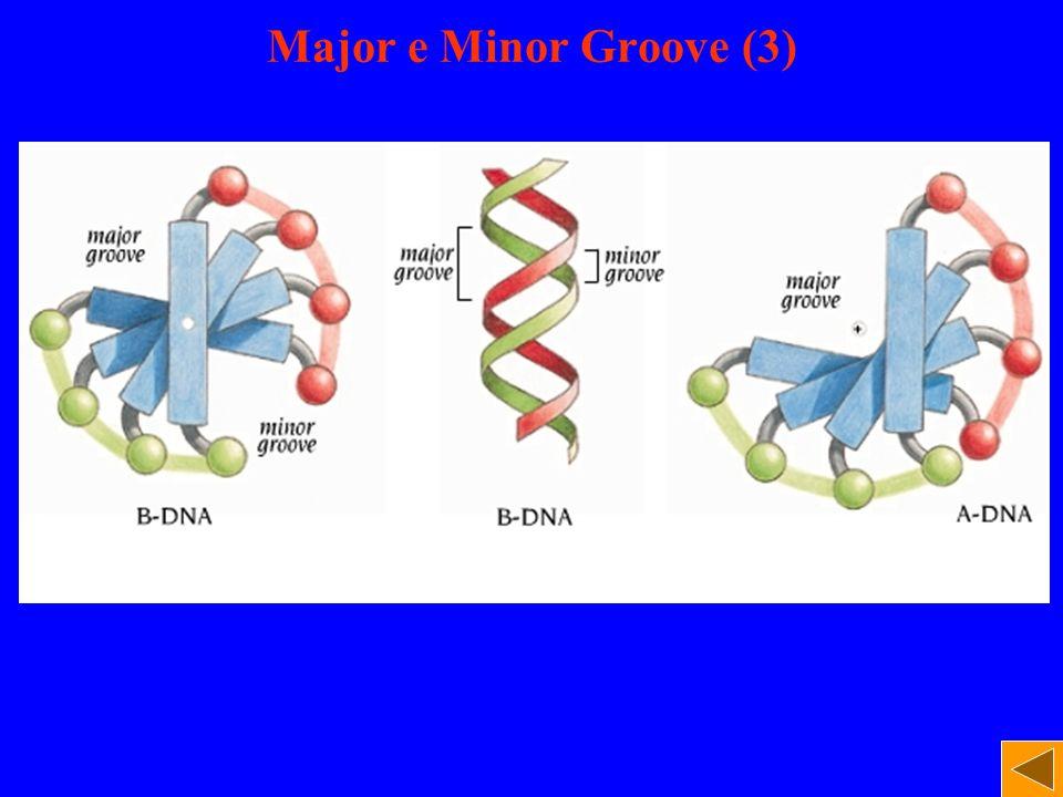 Major e Minor Groove (3)