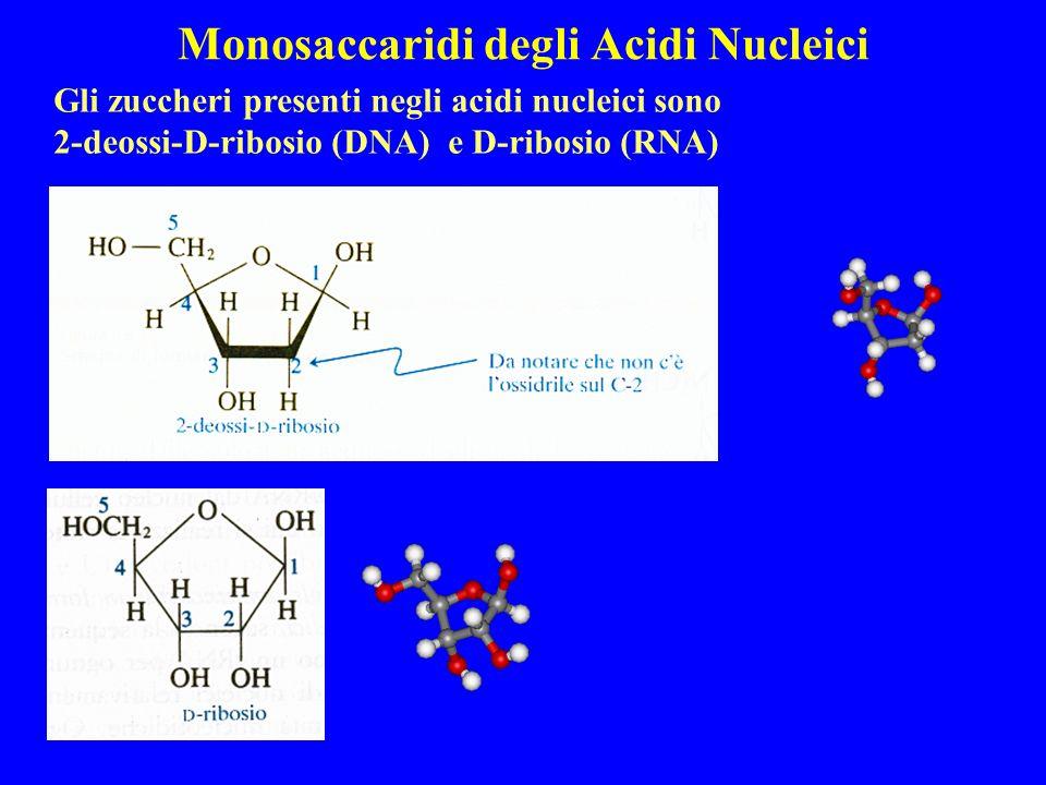 Monosaccaridi degli Acidi Nucleici Gli zuccheri presenti negli acidi nucleici sono 2-deossi-D-ribosio (DNA) e D-ribosio (RNA)