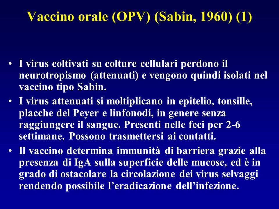 Vaccino orale (OPV) (Sabin, 1960) (1) I virus coltivati su colture cellulari perdono il neurotropismo (attenuati) e vengono quindi isolati nel vaccino tipo Sabin.