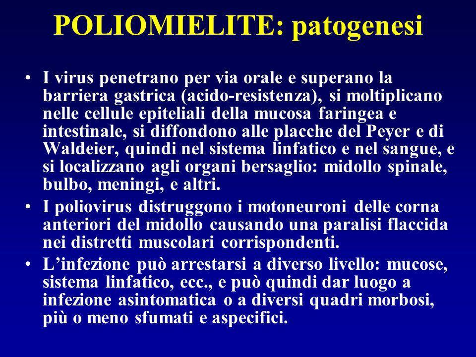 POLIOMIELITE: patogenesi I virus penetrano per via orale e superano la barriera gastrica (acido-resistenza), si moltiplicano nelle cellule epiteliali della mucosa faringea e intestinale, si diffondono alle placche del Peyer e di Waldeier, quindi nel sistema linfatico e nel sangue, e si localizzano agli organi bersaglio: midollo spinale, bulbo, meningi, e altri.