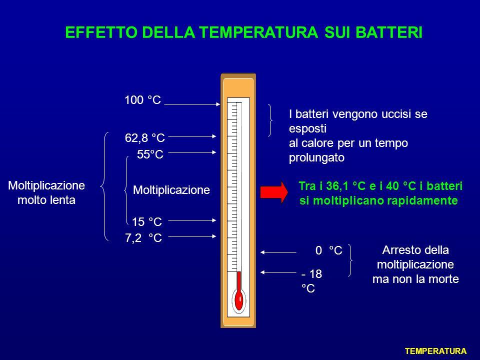 EFFETTO DELLA TEMPERATURA SUI BATTERI 62,8 °C 7,2 °C Moltiplicazione molto lenta 100 °C I batteri vengono uccisi se esposti al calore per un tempo pro