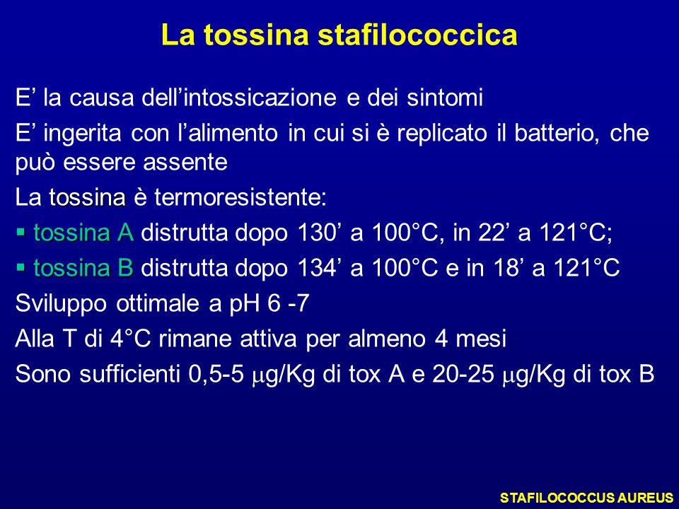 La tossina stafilococcica E la causa dellintossicazione e dei sintomi E ingerita con lalimento in cui si è replicato il batterio, che può essere assen