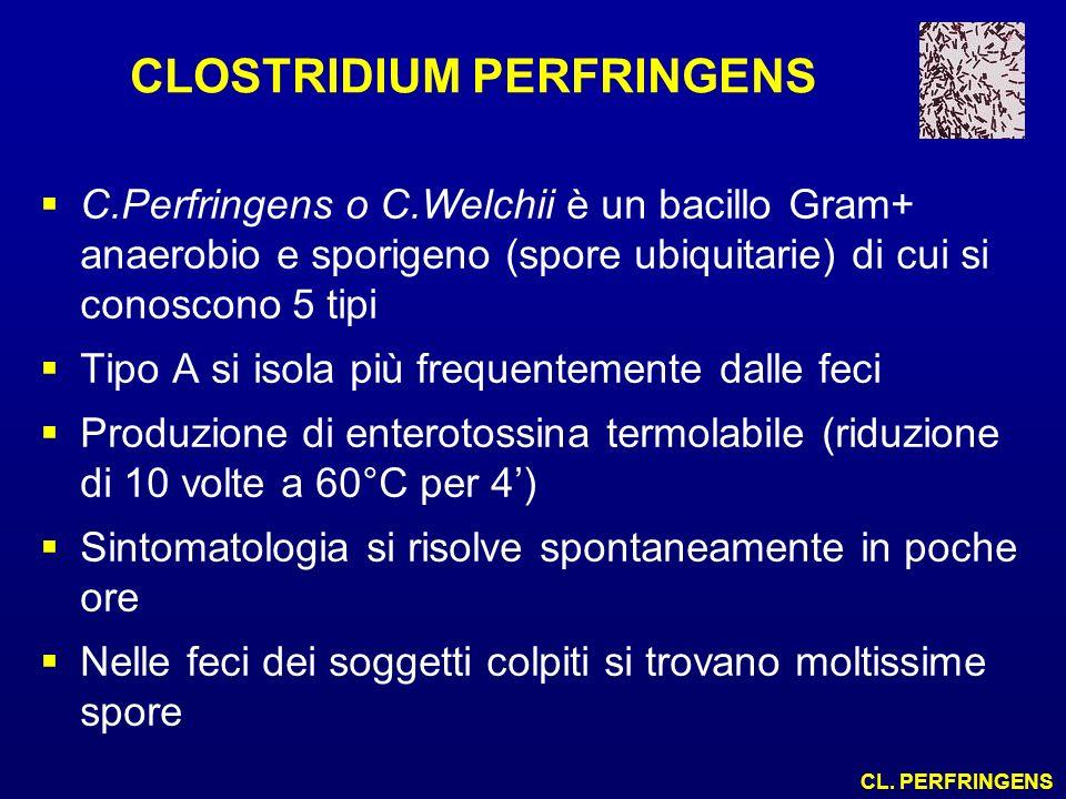 CLOSTRIDIUM PERFRINGENS C.Perfringens o C.Welchii è un bacillo Gram+ anaerobio e sporigeno (spore ubiquitarie) di cui si conoscono 5 tipi Tipo A si is