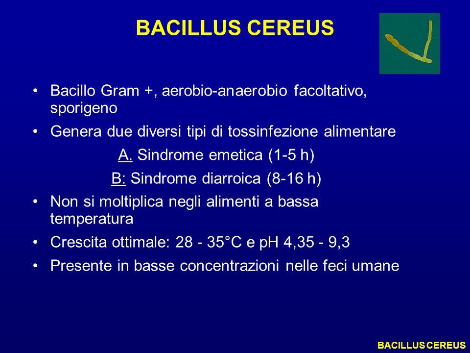 BACILLUS CEREUS Bacillo Gram +, aerobio-anaerobio facoltativo, sporigeno Genera due diversi tipi di tossinfezione alimentare A. Sindrome emetica (1-5