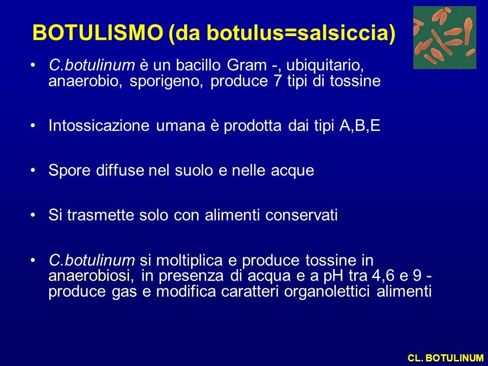 BOTULISMO (da botulus=salsiccia) C.botulinum è un bacillo Gram -, ubiquitario, anaerobio, sporigeno, produce 7 tipi di tossine Intossicazione umana è
