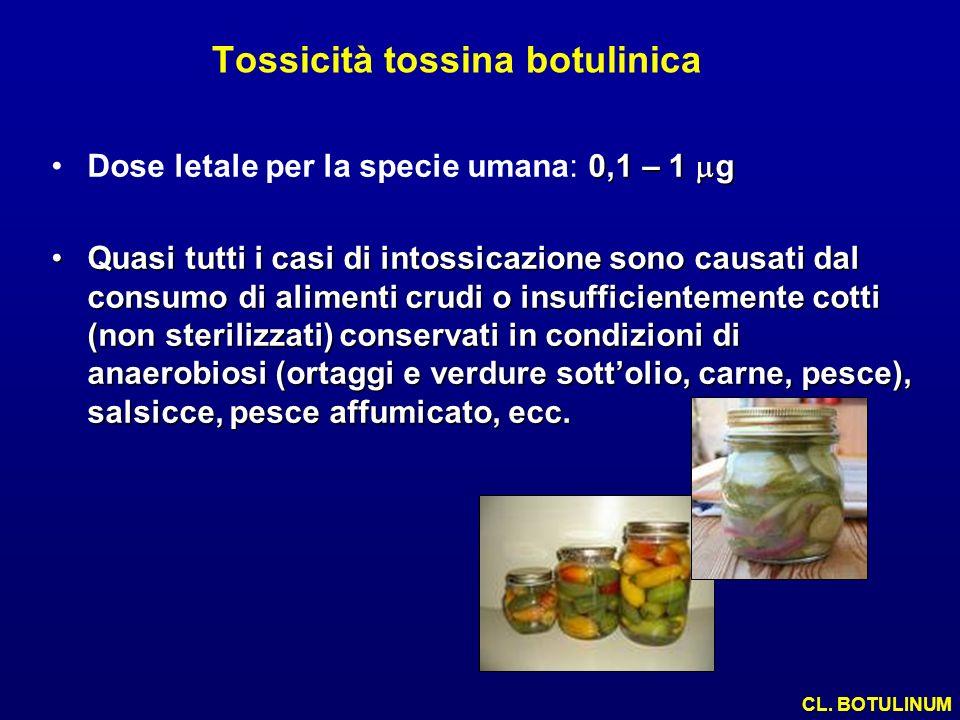 Tossicità tossina botulinica 0,1 – 1 gDose letale per la specie umana: 0,1 – 1 g Quasi tutti i casi di intossicazione sono causati dal consumo di alim