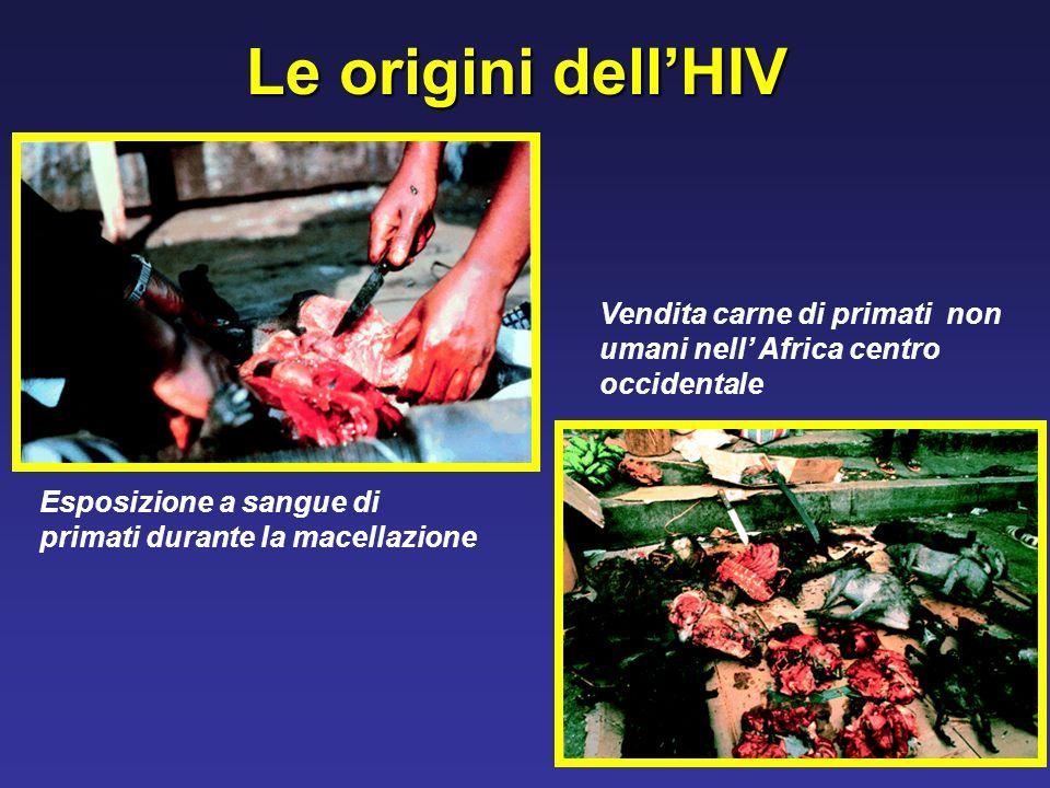 Le origini dellHIV Esposizione a sangue di primati durante la macellazione Vendita carne di primati non umani nell Africa centro occidentale