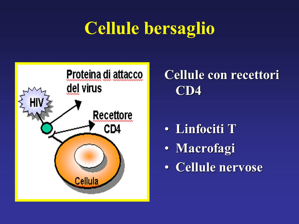 Cellule bersaglio Cellule con recettori CD4 Linfociti TLinfociti T MacrofagiMacrofagi Cellule nervoseCellule nervose