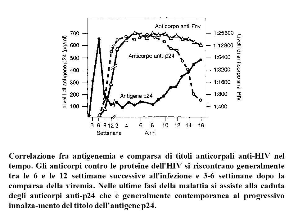 Correlazione fra antigenemia e comparsa di titoli anticorpali anti-HIV nel tempo. Gli anticorpi contro le proteine dell'HIV si riscontrano generalment