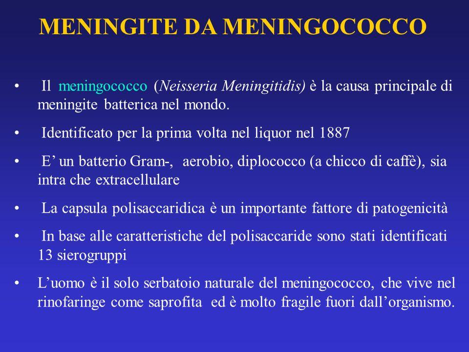 MENINGITE DA MENINGOCOCCO Il meningococco (Neisseria Meningitidis) è la causa principale di meningite batterica nel mondo. Identificato per la prima v