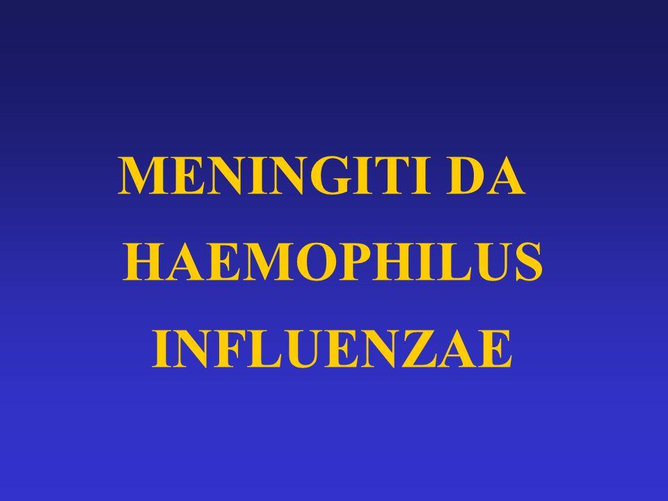 MENINGITI DA HAEMOPHILUS INFLUENZAE