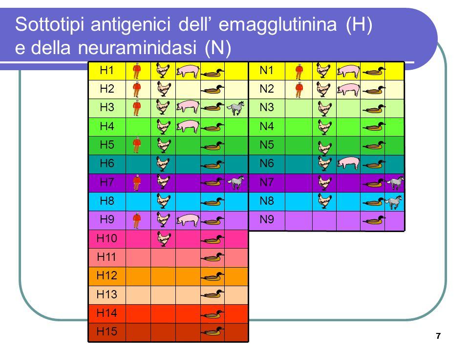 8 Trasmissione diretta alluomo di un virus aviario ( replicazione meno efficiente) 1997 H5N1 chicken flu Hong Kong Infezione mista: virus aviari ed umani Riassortimento genetico 1957 H2N2 Asiatica 1968 H3N2 Hong Kong Meccanismi responsabili della emergenza di pandemie nelluomo (antigenic shift)