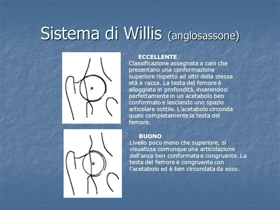 Sistema di Willis (anglosassone) ECCELLENTE Classificazione assegnata a cani che presentano una conformazione superiore rispetto ad altri della stessa