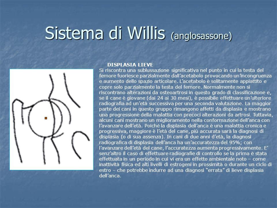 Sistema di Willis (anglosassone) DISPLASIA LIEVE Si riscontra una sublussazione significativa nel punto in cui la testa del femore fuoriesce parzialme