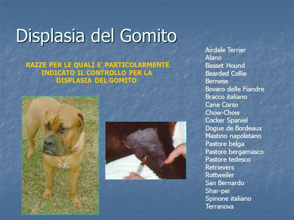 Displasia del Gomito Airdale Terrier Alano Basset Hound Bearded Collie Bernese Bovaro delle Fiandre Bracco italiano Cane Corso Chow-Chow Cocker Spanie